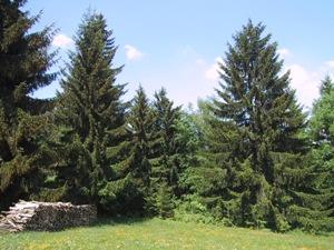 Waldnutzung